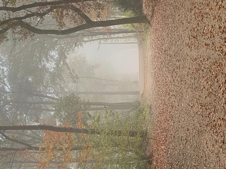 Mysterieus Bospad - Mysterieus Bospad <br /> <br /> Op een mooie mistige dag een fijne boswandeling gemaakt