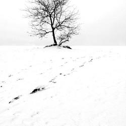 Sporen in de sneeuw...