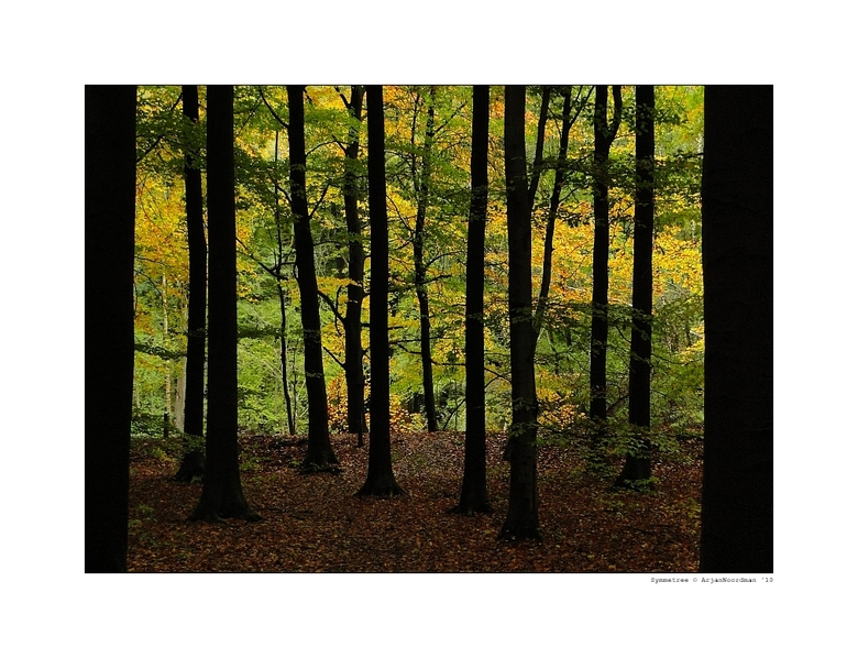 "Symmetree - Symmetree / Dancing Trees <br /> <br /> <a href=""http://www.youtube.com/watch?v=K0JBBy9hkeU"">Some Music</a><br /> <br /> Gr Arjan"