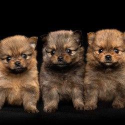 Pups van Roxy