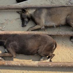 Hondenleven 3