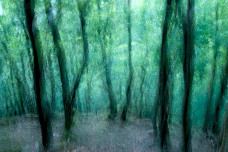 Dancing forest - De afgelopen week een aantal dagen naar de Eifel geweest. Wat een mooie plek om te wandelen en te genieten van de natuur. Zo dicht bi
