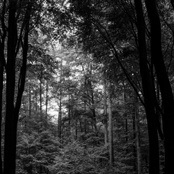 Licht in het duistere bos