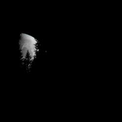 Zie de maan schijnt door de bomen...
