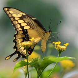schoonheid  van een vlinder
