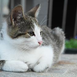 Kitten @ Macedonië