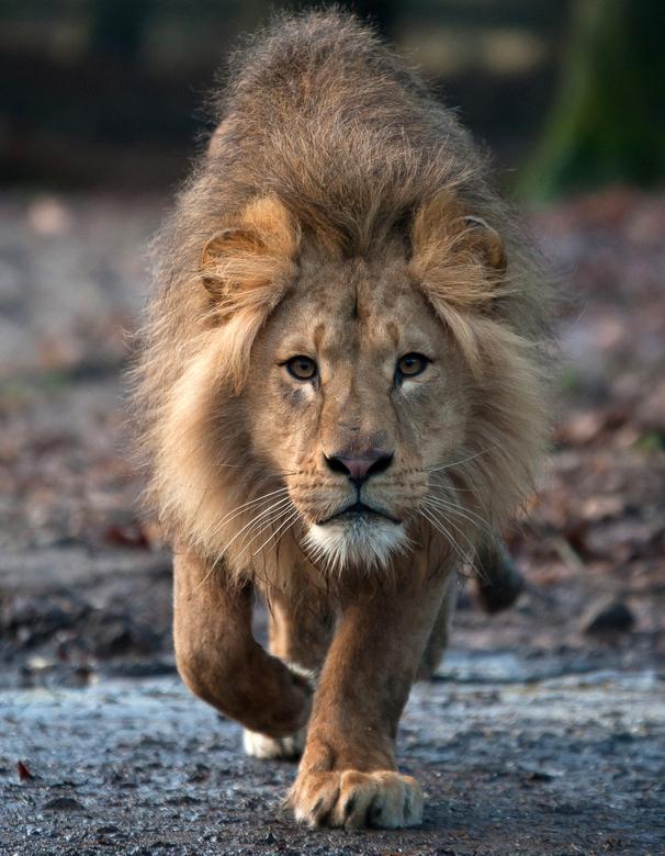 Leeuw Burgers' Zoo - Leeuw Burgers' Zoo
