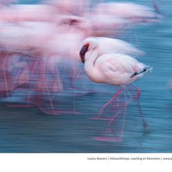 Flaming flamingo