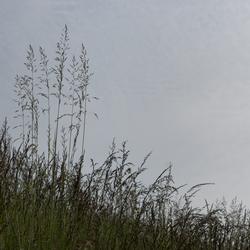 bloeiende grassen 280516_16 z