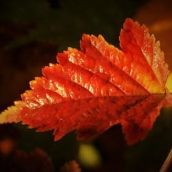 Herfstkleuren...