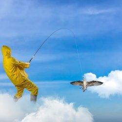 Fishing birds