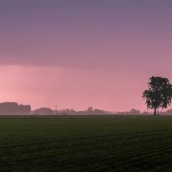 Blozende polder