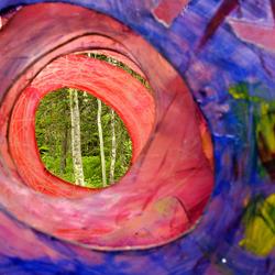 kleur in het bos