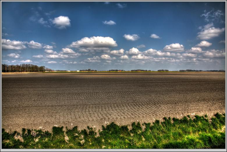dit jaar geen bollen ....  - een van de velden waar vorig jaar wel bollen stonden, mooi contrast met de kleurige velden in de buurt.
