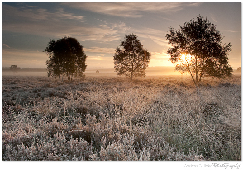 Frosted heathland