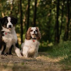 2 doggo's