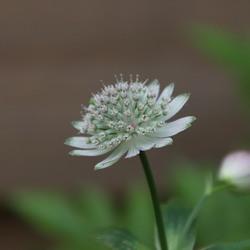 Onbekende plant in de tuin