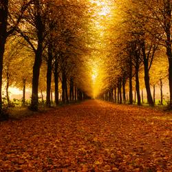 Lopen onder het licht.