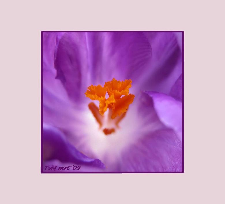 La Fleur Violette Macro Foto Van Truitje2003 Zoom Nl