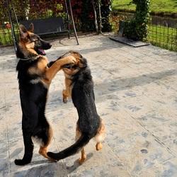 Roxi en Sietske lekker stoeien