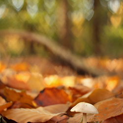 I love love love de herfst!
