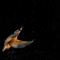 Vliegen in een sterrenhemel