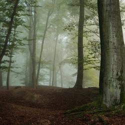 Silent Dawn.