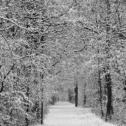 Snowroad...