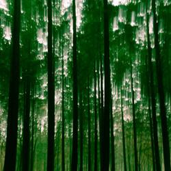 Donker bos.....maar dan anders