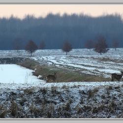 Herten en reigers