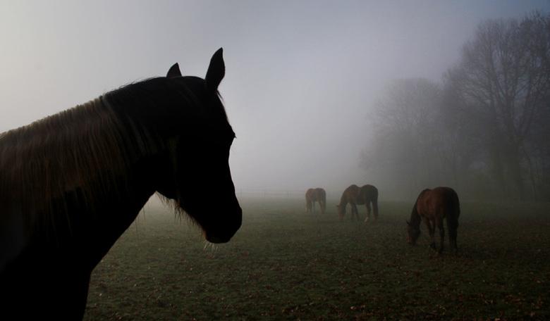 baikes in bingelrader mist - baikes in bingelrader mist <br /> <br /> het was er mistig zeg<br /> cam3/0523