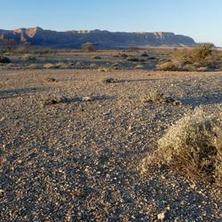 Ochtend in de woestijn