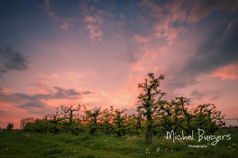 Pear trees -