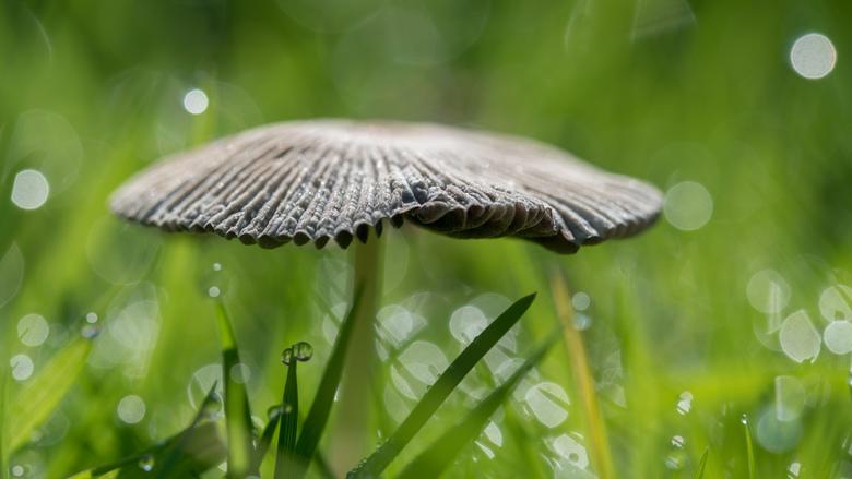 I love paddenstoelen