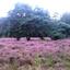 Heide veld op Het Hulsbeek