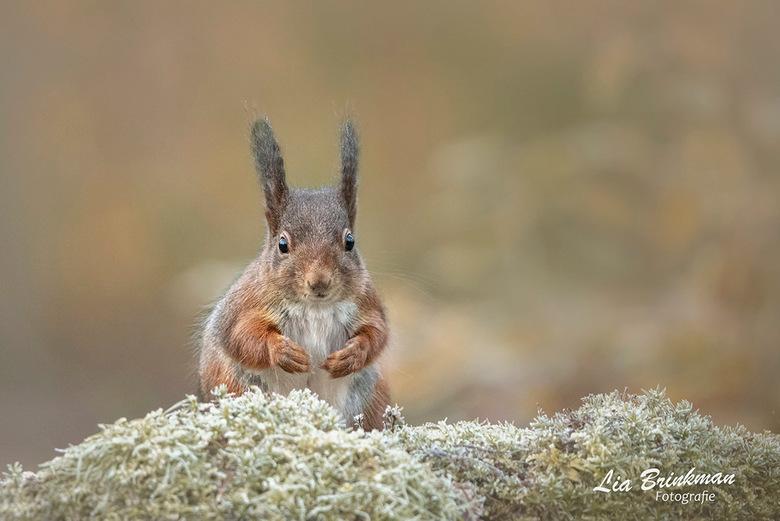 Nieuwsgierig aagje. - Nieuwsgierig aagje,<br /> Gisteren naar een boshut geweest en heb me vermaakt met deze grappige en  nieuwsgierige eekhoorntjes.