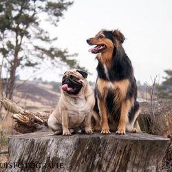 Haddock en Suki op een boomstam