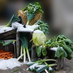 wintergroenten