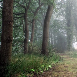 Lichte nevel in het bos.
