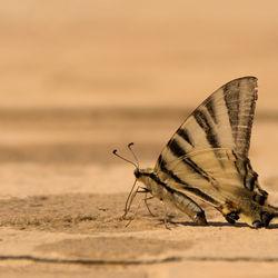 Vlinder in Italië