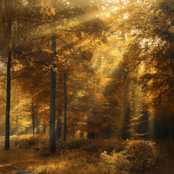 The last autumn rays