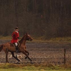 geschoren paard in galop