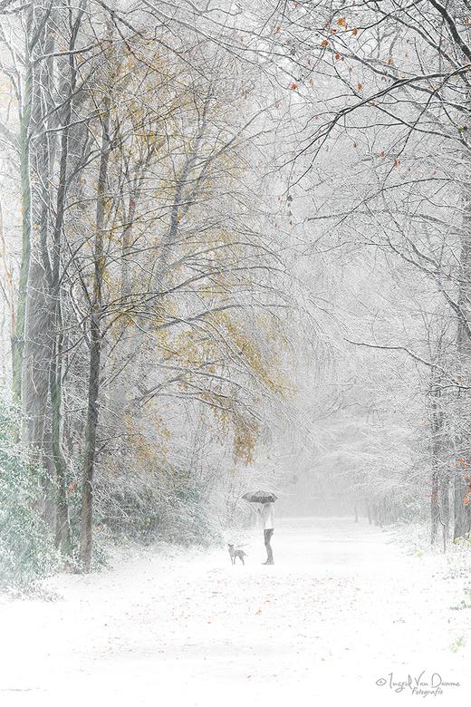 White Dreams - deze nog wat gekleurde bladeren in de dreef trokken m'n aandacht. Dacht ga hier toch maar eens een High Key foto van maken.