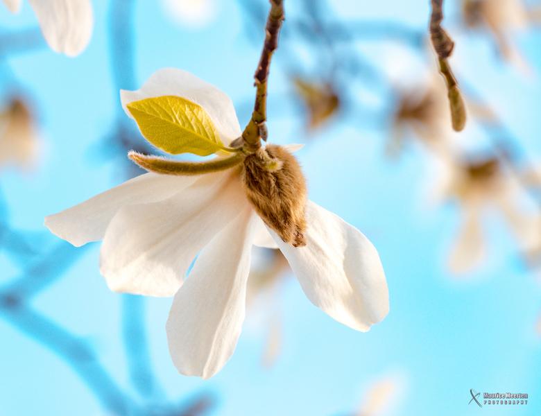 Lente bloesem 2018