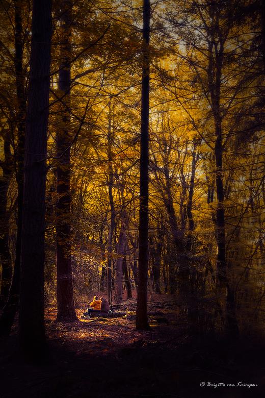 Drawn to the Light - Mede zoomers genietend van het magische licht in het Speulderbos