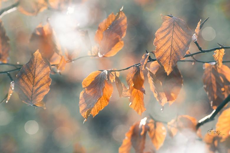 Double winter beauty