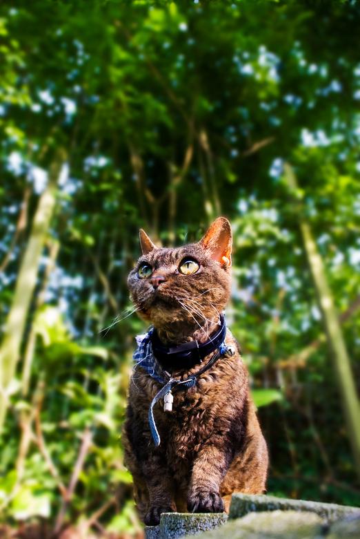 """Watch out for that cat! - Derde foto uit mijn serie """"Honey, I shrunk myself"""". Dit keer met een kat als onderwerp."""