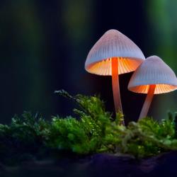 Autumn fairytale; Hansel and Gretel