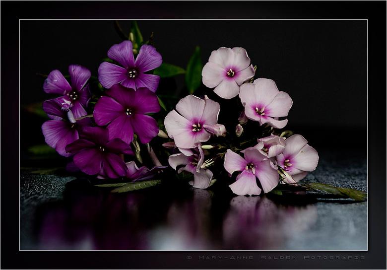 Bloemetje voor jullie... - Hallo allemaal,<br /> <br /> Na een lange stilte van mijn kant en geen uitleg kom ik langs met een bloemetje om het goed