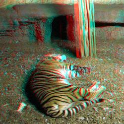 Tiger Blijdorp Zoo 3D GoPro